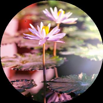 ing_19071_03563-de-kracht-van-dankbaarheid-circle